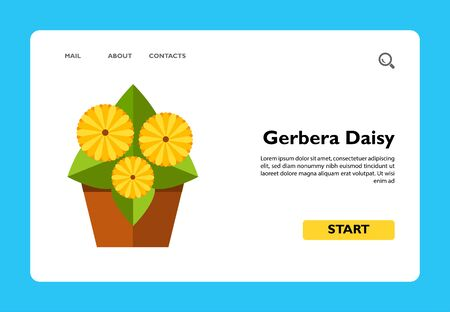 Multicolored vector icon of growing gerbera daisy in pot, three flowers, side view