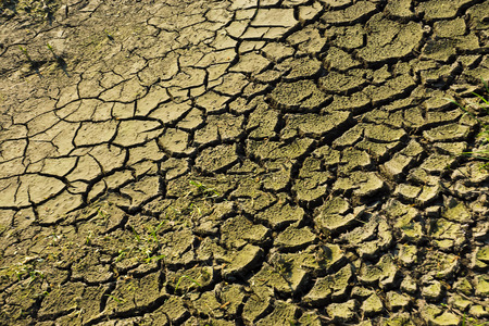 scorched: scorched earth during a summer drought Stock Photo