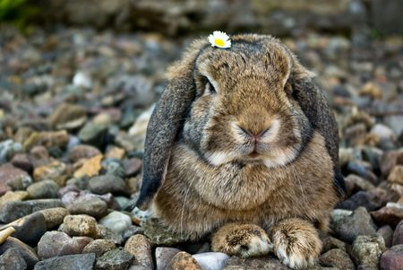 rabbit portrait with flowe on head looking at camera photo