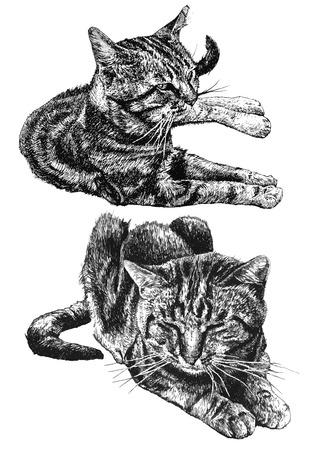 두 개의 귀여운 고양이 밝은 배경에 누워 그림