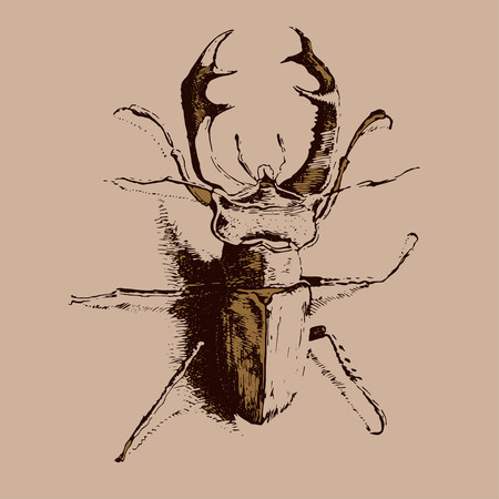 beetle: illustration with colored beetle deer on a light background