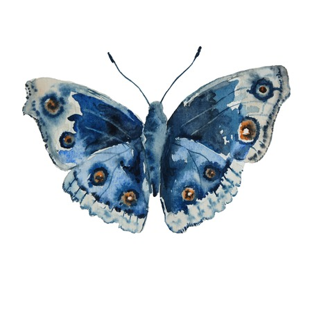 illustration with blue  butterfly on a white background Ilustração