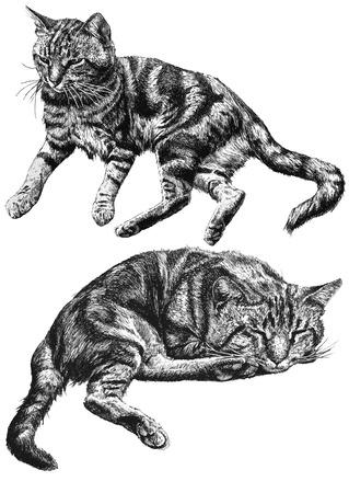 빛 배경에 누워 두 귀여운 고양이와 그림 일러스트