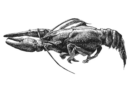 illustratie met een grote kanker met de hand getekend op een lichte achtergrond Stock Illustratie