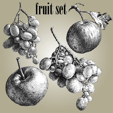 illustration with grapes and apples. fruit set. Ilustração