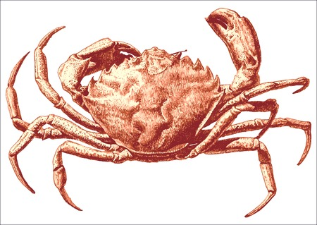 illustration with a large red crab drawn by hand on a light background