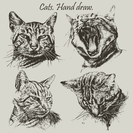 Set with different heads cats. (hand draw)