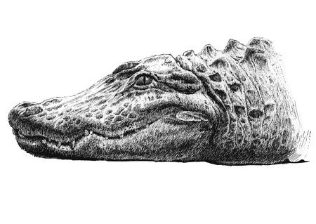 nile river: illustration with a big head of a crocodile (hand draw)