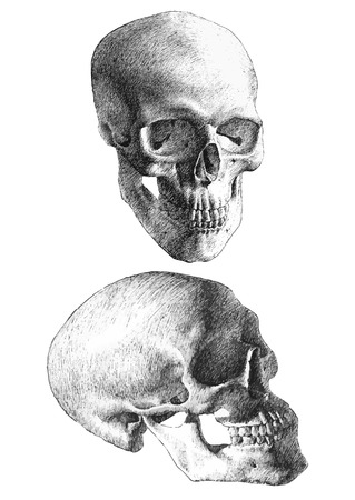 hand on chin: illustration with two anatomical skulls  (hand draw)