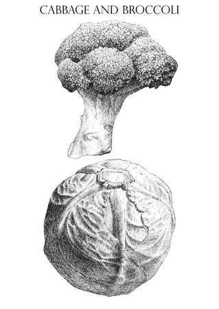brocoli: illustration with  cabbage  and  brocoli  (hand draw)