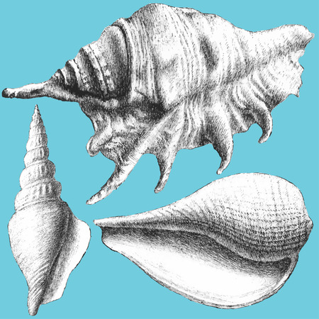 cockle: illustration with different realistic shells on a blue background