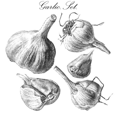 old fashioned vegetables: illustration with garlic. hand draw.set.