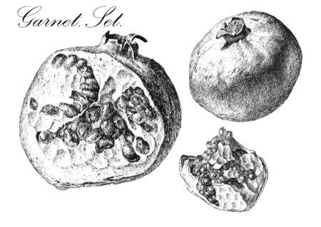 garnet: Garnet set. Hand draw illustration. Illustration