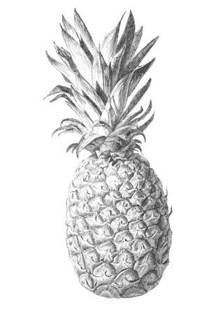 pineapple. hand draw. Stock Illustratie