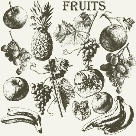 pomegranate juice: Fruit set. Hand drawn.