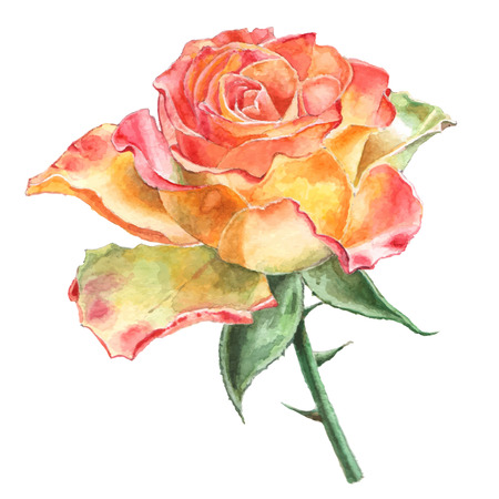 thorns and roses: Rose. Watercolor. Hand drawn.