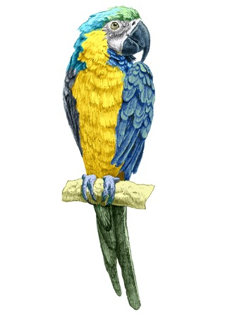 illustration with parrot. hand drawn.