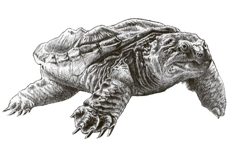 Common snapping turtle. Hand drawn. Vector