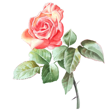 Realistic rose. Watercolor. Hand drawn. Фото со стока - 39540936