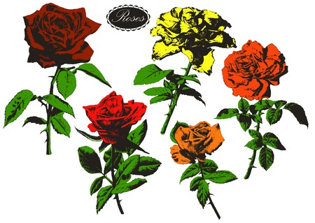 Illustration with roses. Hand drawn.