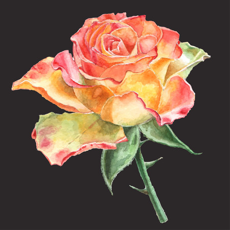 rose bouquet: Realistic rose. Watercolor. Hand drawn.