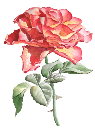 thorn: Realistic rose. Watercolor. Hand drawn.