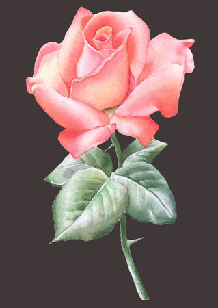 Illustration with red rose. Watercolor. Vector. Hand drawn. Illustration