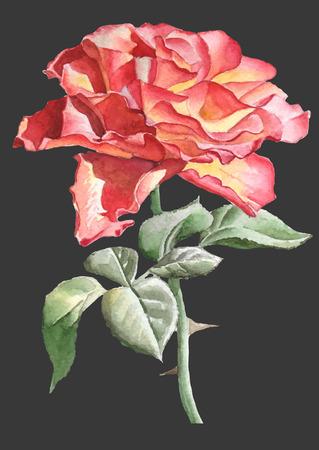 Realistic rose. Watercolor. Hand drawn.