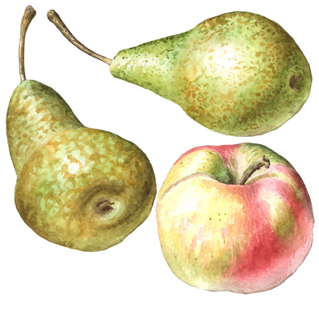 yellow apple: illustration with pears and apple. watercolor. hand drawn.