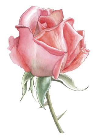 Illustration with red rose. Vector. Watercolor. Hand drawn. Vettoriali
