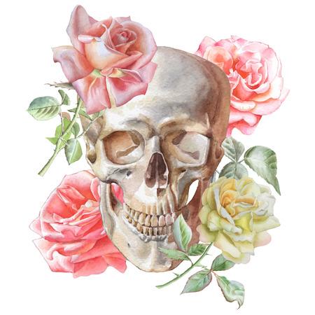 esqueleto: Ilustración con el cráneo y las rosas. Acuarela. Vector. Dibujado a mano. Vectores