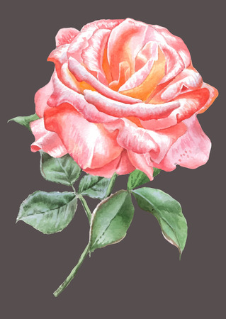 Realistic red rose. Watercolor. Vector. Hand drawn. Illustration