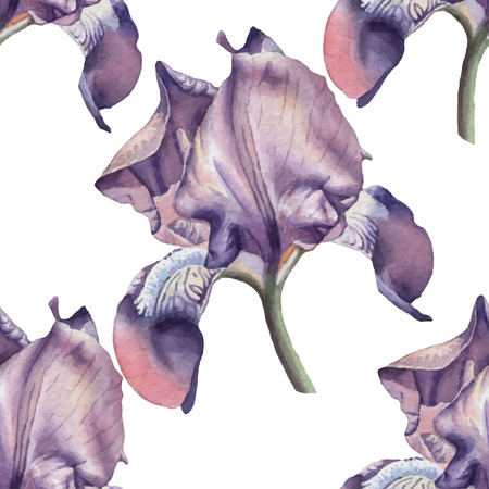 fragrant: Seamless pattern with iris. Watercolor Hand drawn.