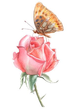 나비와 장미. 수채화 손으로 그려진. 일러스트