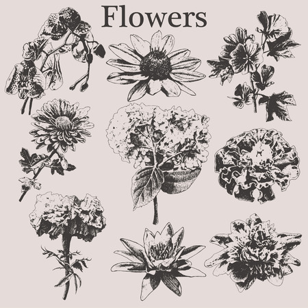 vintage drawing: Set with different flowers. Hand drawn.