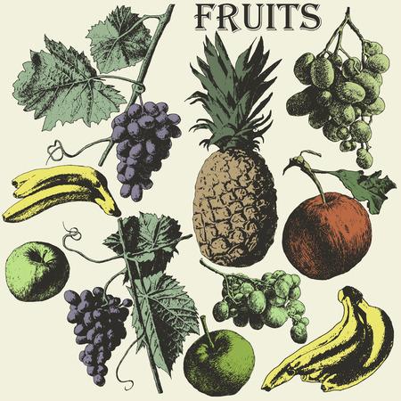 hand drawn: Fruit set. Hand drawn.