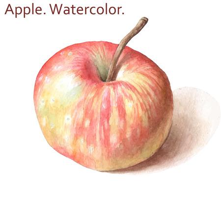 사과와 그림입니다. 수채화. 손으로 그린.