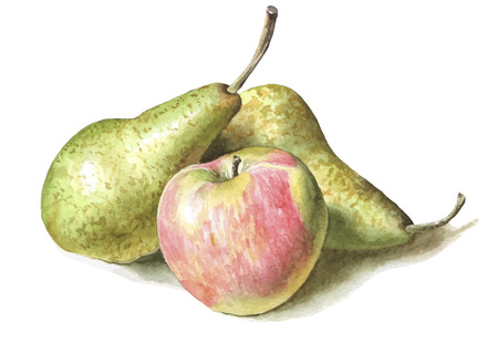 still life: illustration with pears and apples. watercolor hand drawn.