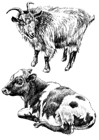 yeanling: Monochrome illustration with cow and goat. Vector. Hand drawn.