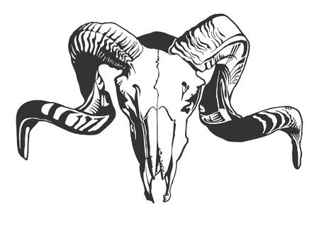 cuernos: Ilustración con el cráneo de cabra. Dibujado a mano. Vector.