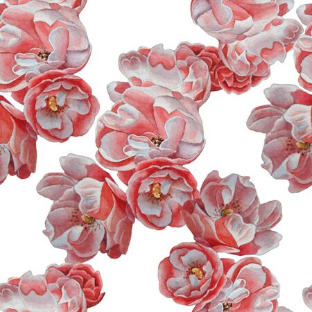 rose petals: Seamless pattern with red flowers. Dog-rose. Watercolor. Hand drawn.