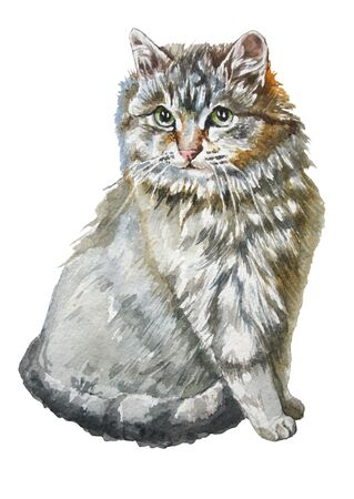 puss: Illustration with a cute little cat. Watercolor. Hand drawn.