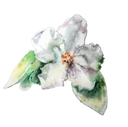 Blossom flower. Watercolor.   Hand drawn.