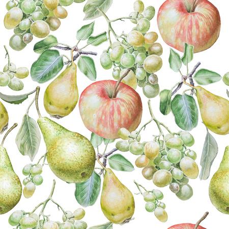 pera: Patrón sin fisuras con las frutas. Manzana, uvas y peras. Ilustración de la acuarela. Dibujado a mano