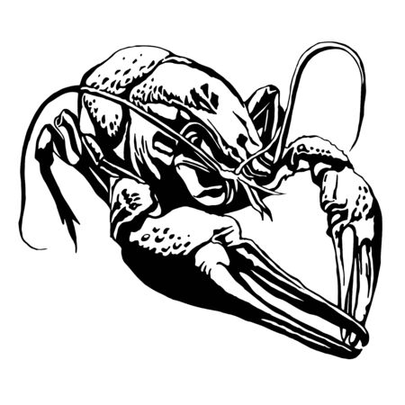 Illustration with a large cancer. Lobster. Vector