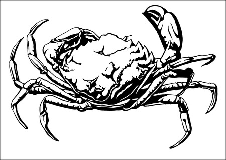 crab meat: Illustration with a large crab. Vector