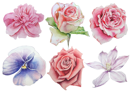 Set with flowers. Rose. Pansies. Watercolor illustration. Фото со стока