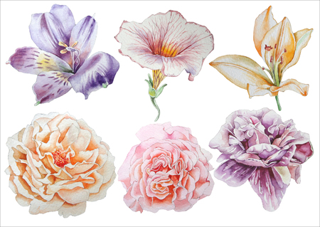 Set with flowers. Rose. Alstroemeria. Pansies. Peony. Lilia. Watercolor illustration.