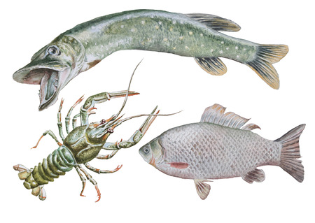 Set with canser and fish. Crucian. Pike. Watercolor illustration