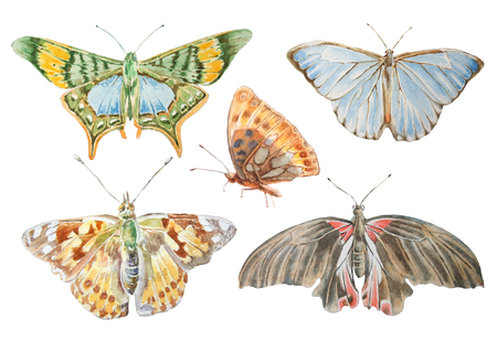 Set with butterflies. Watercolor illustration. Hand drawn.